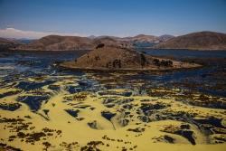 Contaminación en la Bahía de Cohana, Lago Titicaca